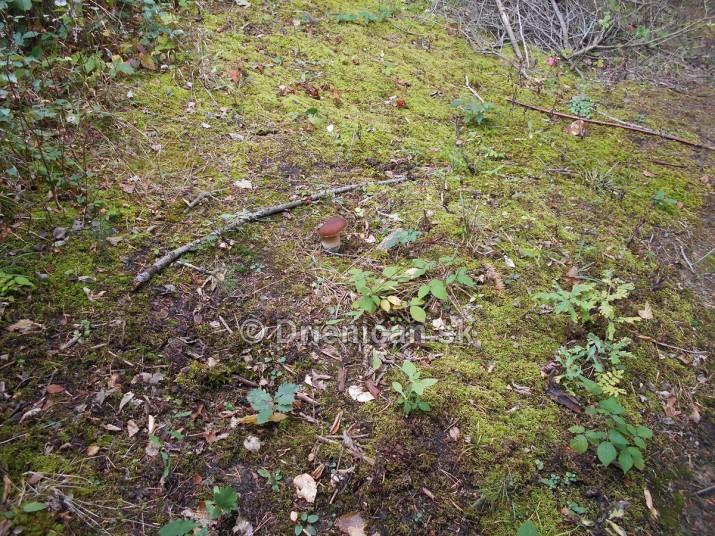 tri hriby v lese zelenom_08