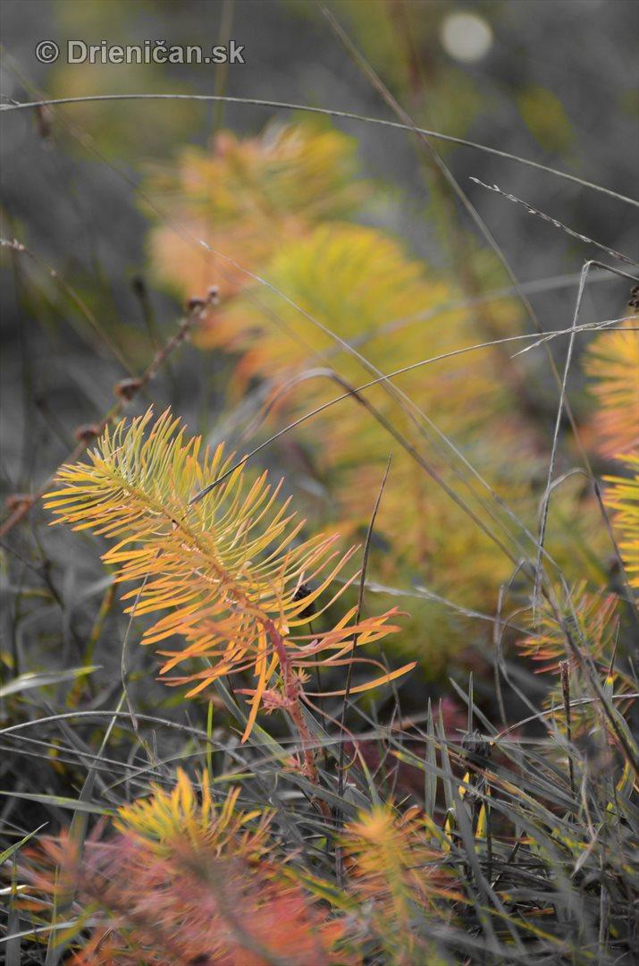 Rastliny z mesacnej krajiny foto_1