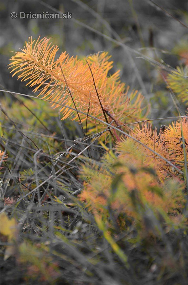 Rastliny z mesacnej krajiny foto_2