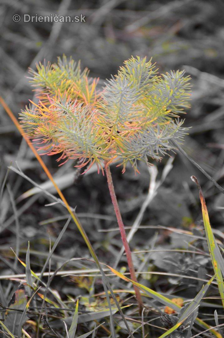 Rastliny z mesacnej krajiny foto_3