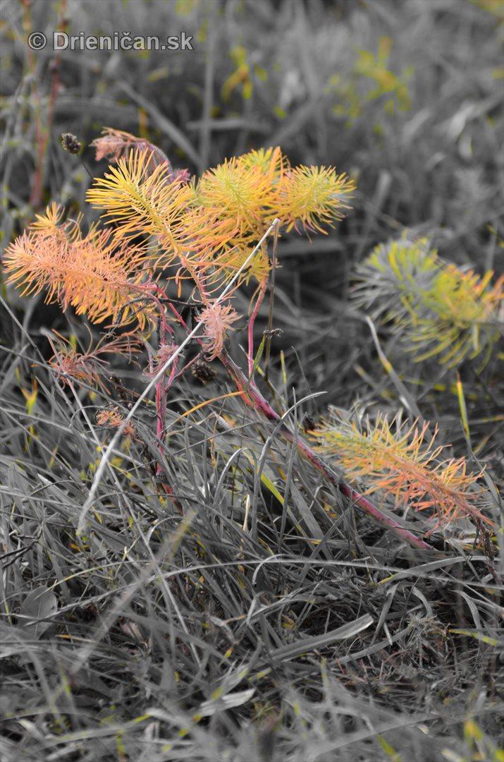Rastliny z mesacnej krajiny foto_4