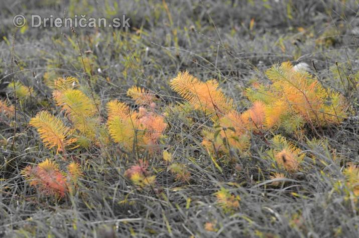 Rastliny z mesacnej krajiny foto_5