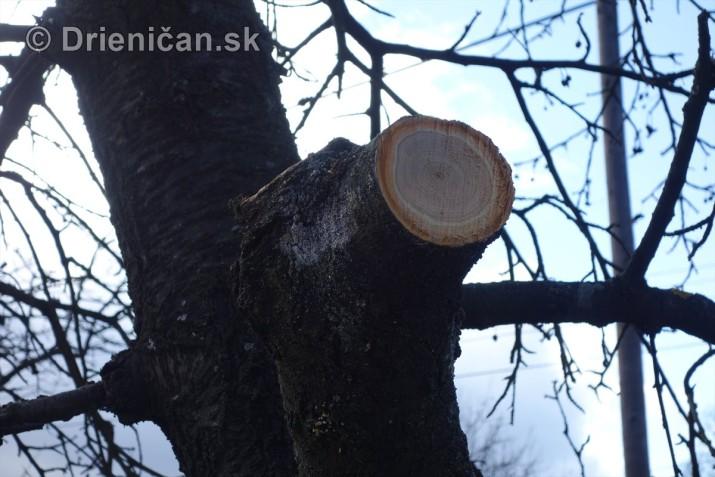 jarna uprava stromov drienica_08