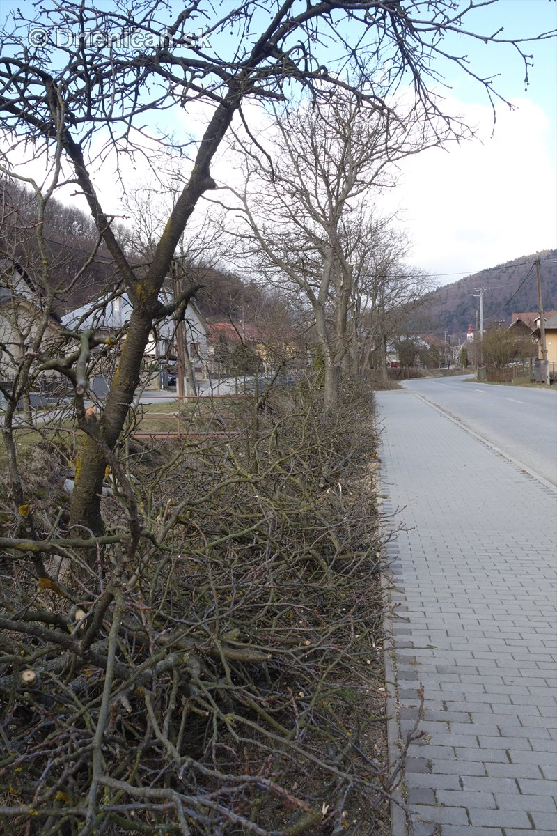 jarna uprava stromov drienica_09
