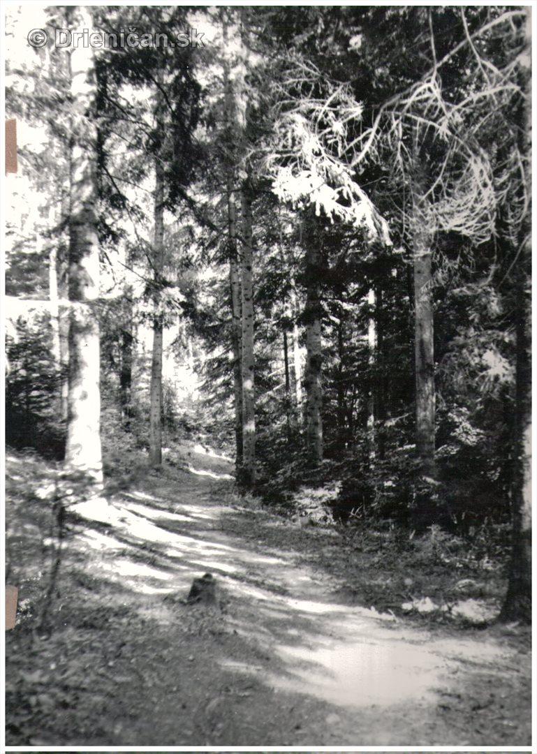 Lesná cestička...