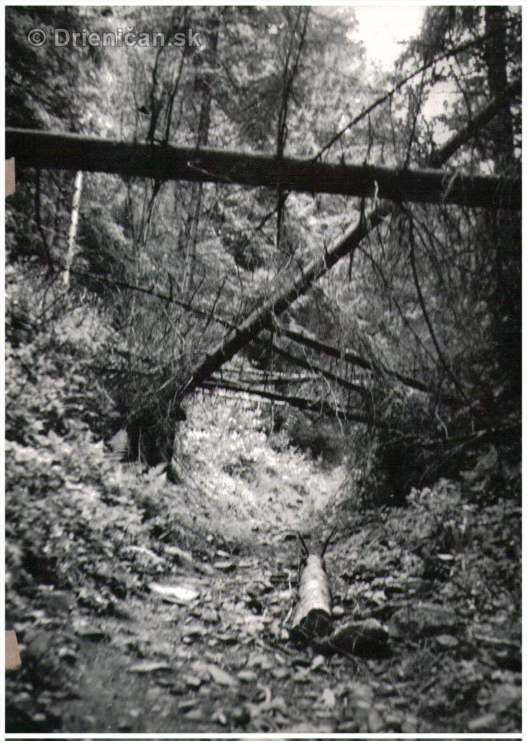 Starý les...