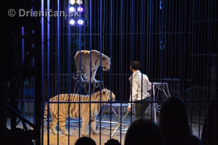 cirkus ales foto_11