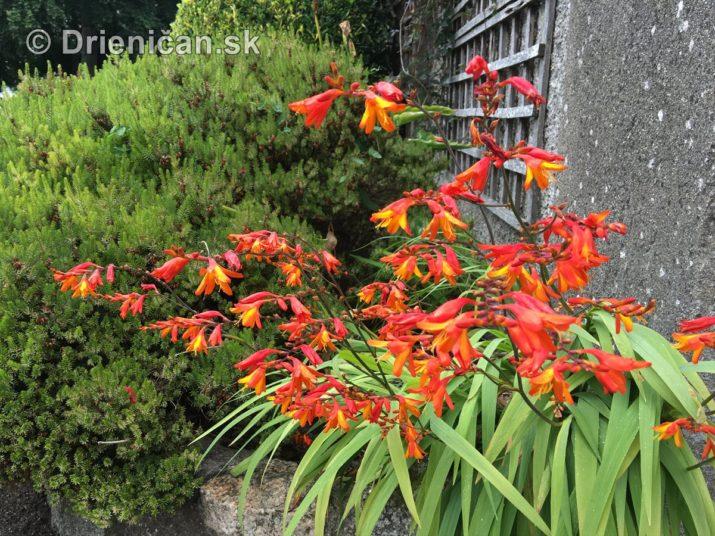 Kým letné kvety odkvitnú