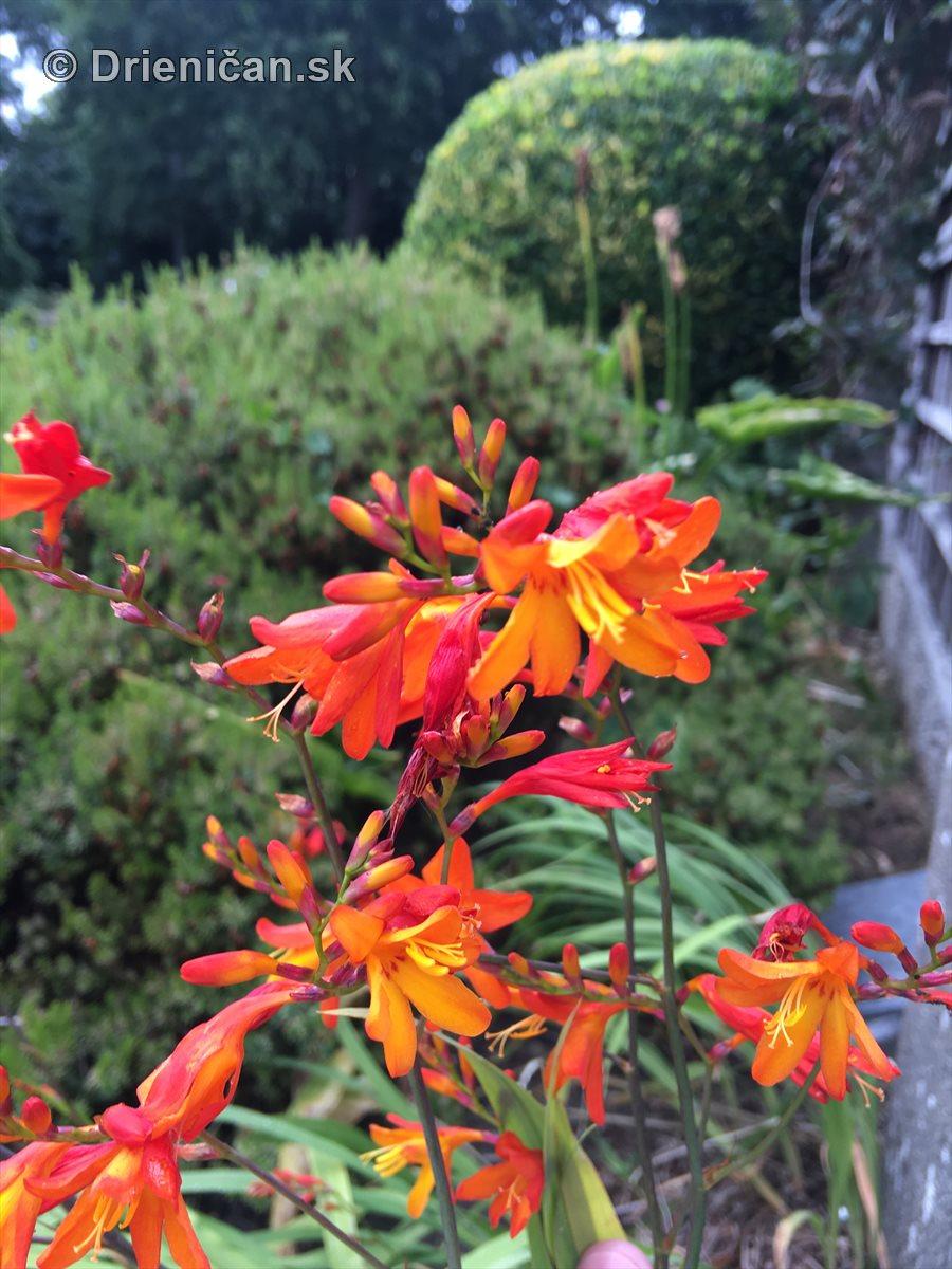 kym letne kvety odkvitnu_02