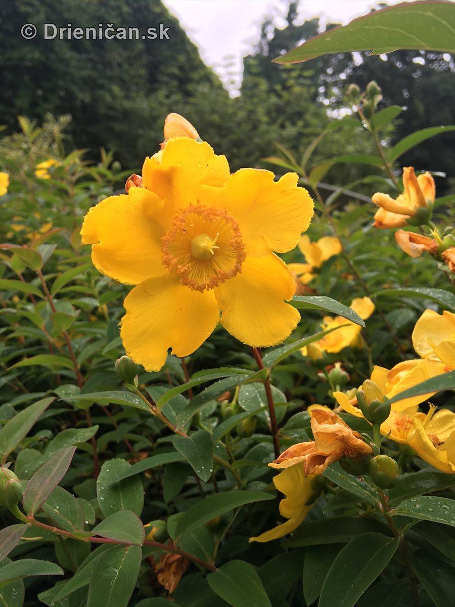 kym letne kvety odkvitnu_03