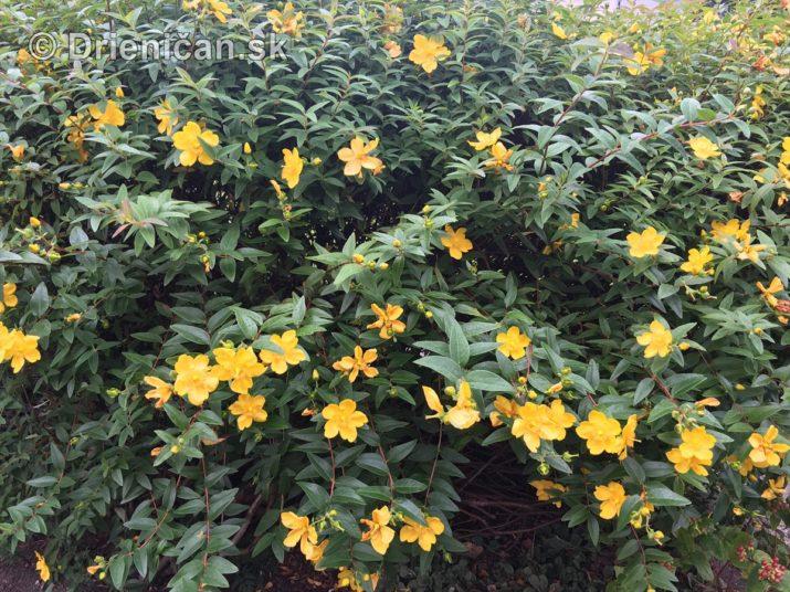 kym letne kvety odkvitnu_04
