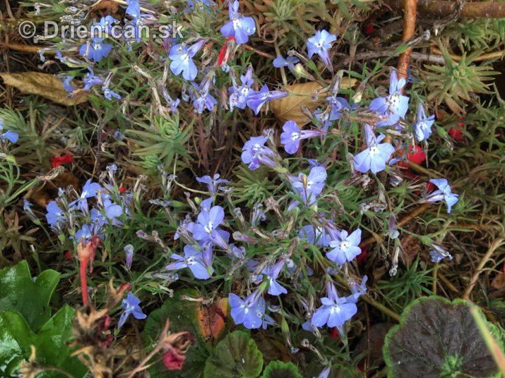 kym letne kvety odkvitnu_06