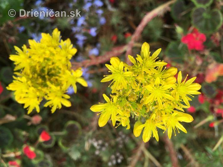 kym letne kvety odkvitnu_07