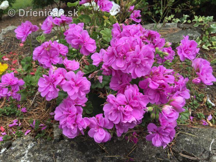 kym letne kvety odkvitnu_08