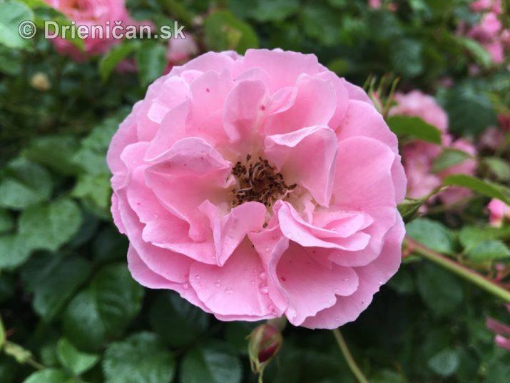 kym letne kvety odkvitnu_09