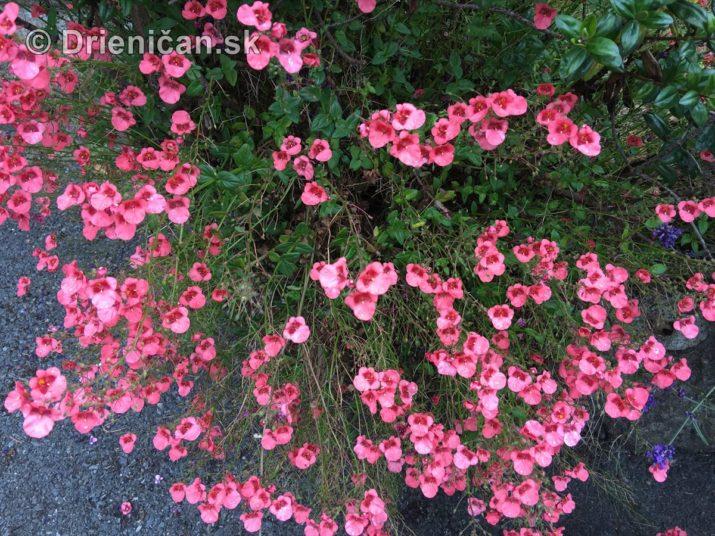 kym letne kvety odkvitnu_10