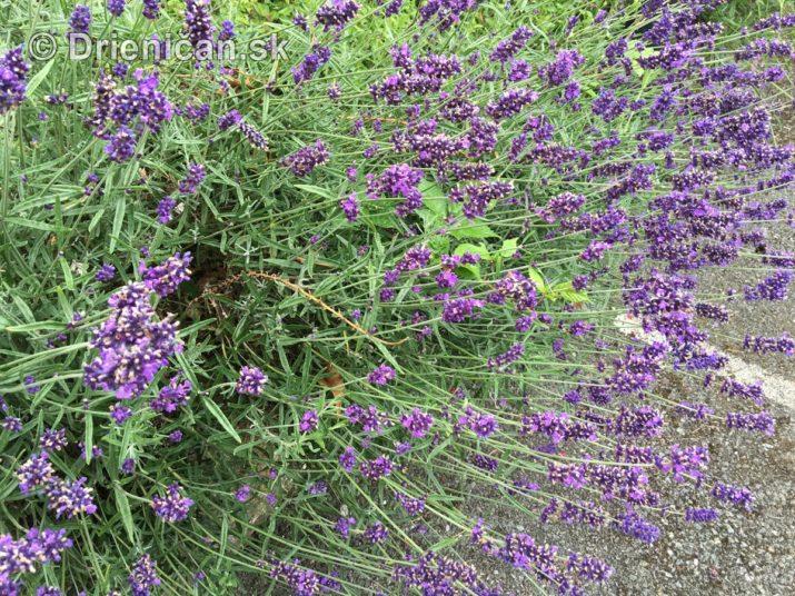 kym letne kvety odkvitnu_11