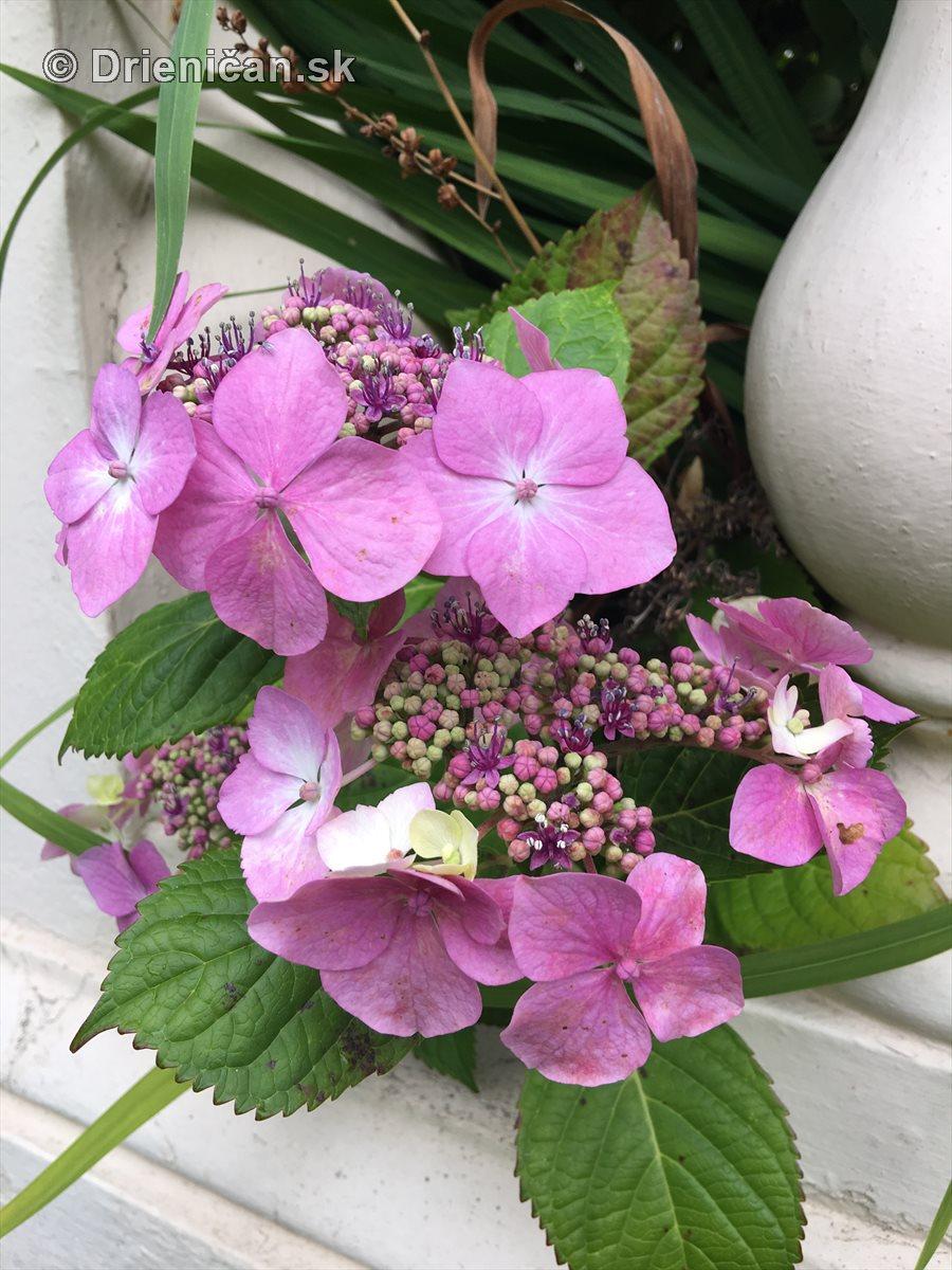 kym letne kvety odkvitnu_12