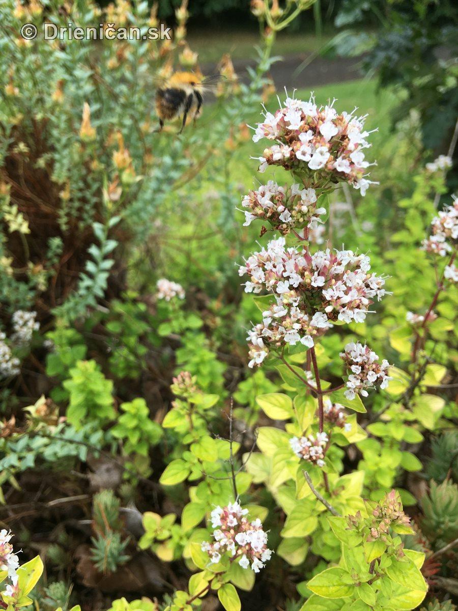 kym letne kvety odkvitnu_13