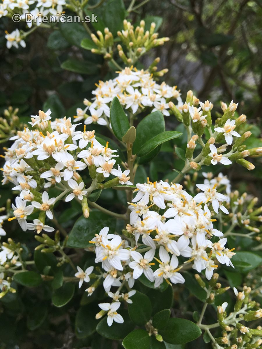 kym letne kvety odkvitnu_16