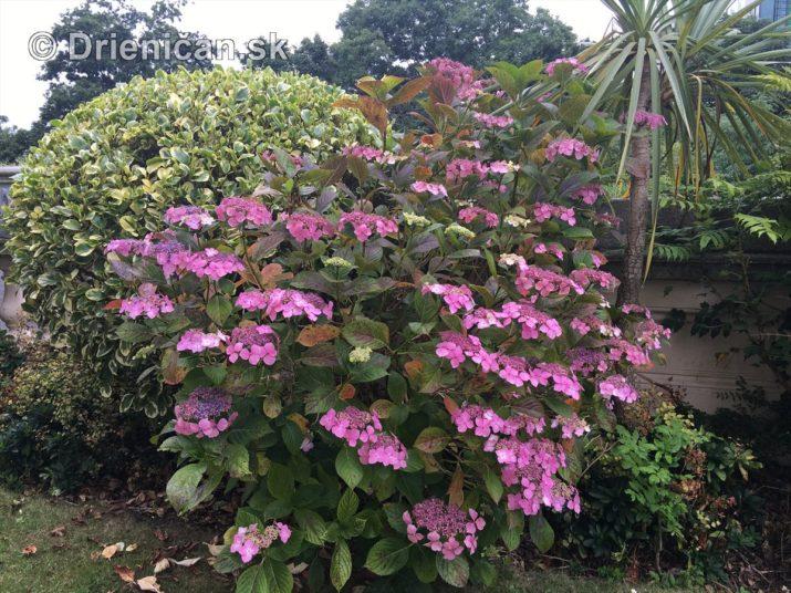kym letne kvety odkvitnu_17