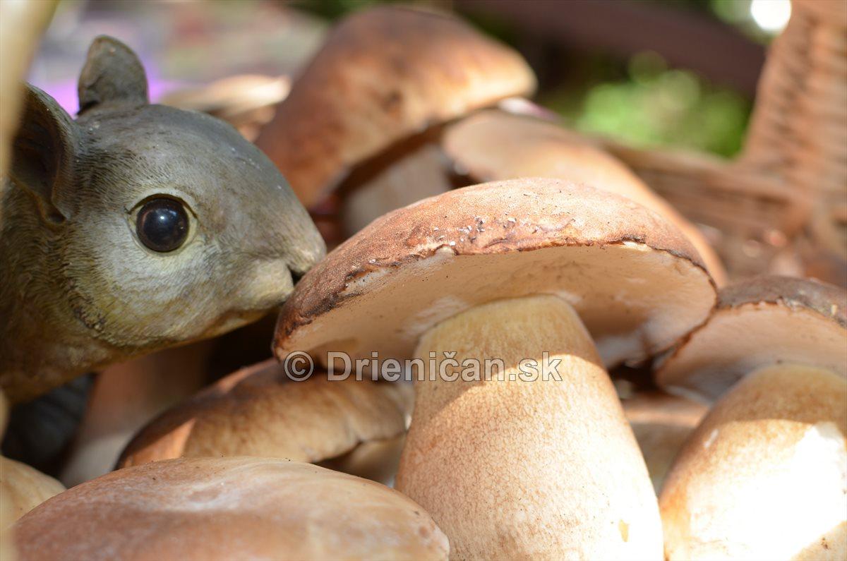 Aj veveričkám chutia hríby