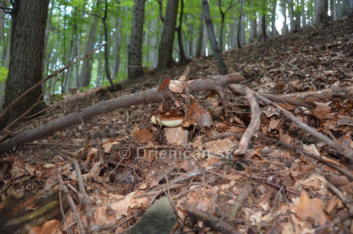 vevericka potrava hriby_07