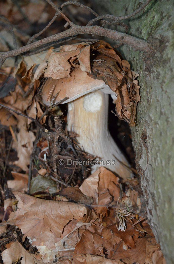 vevericka potrava hriby_15