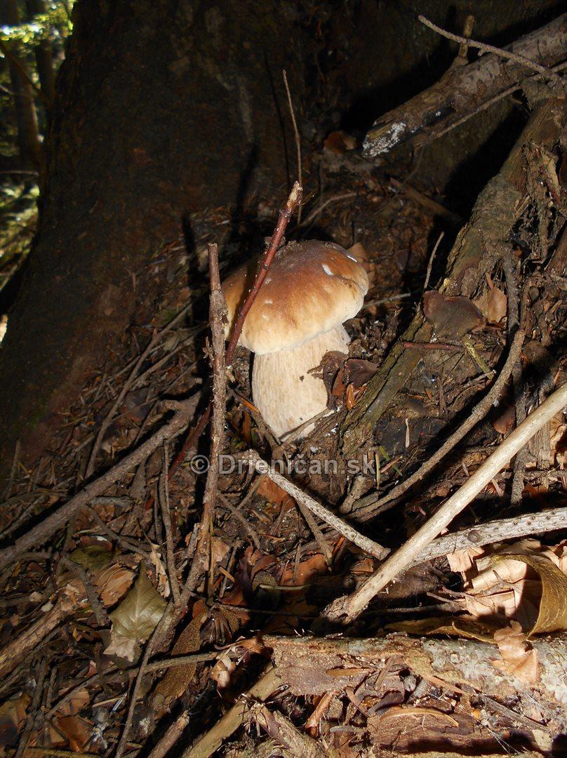 vevericka potrava hriby_19