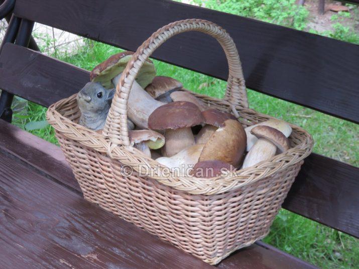 vevericka potrava hriby_30