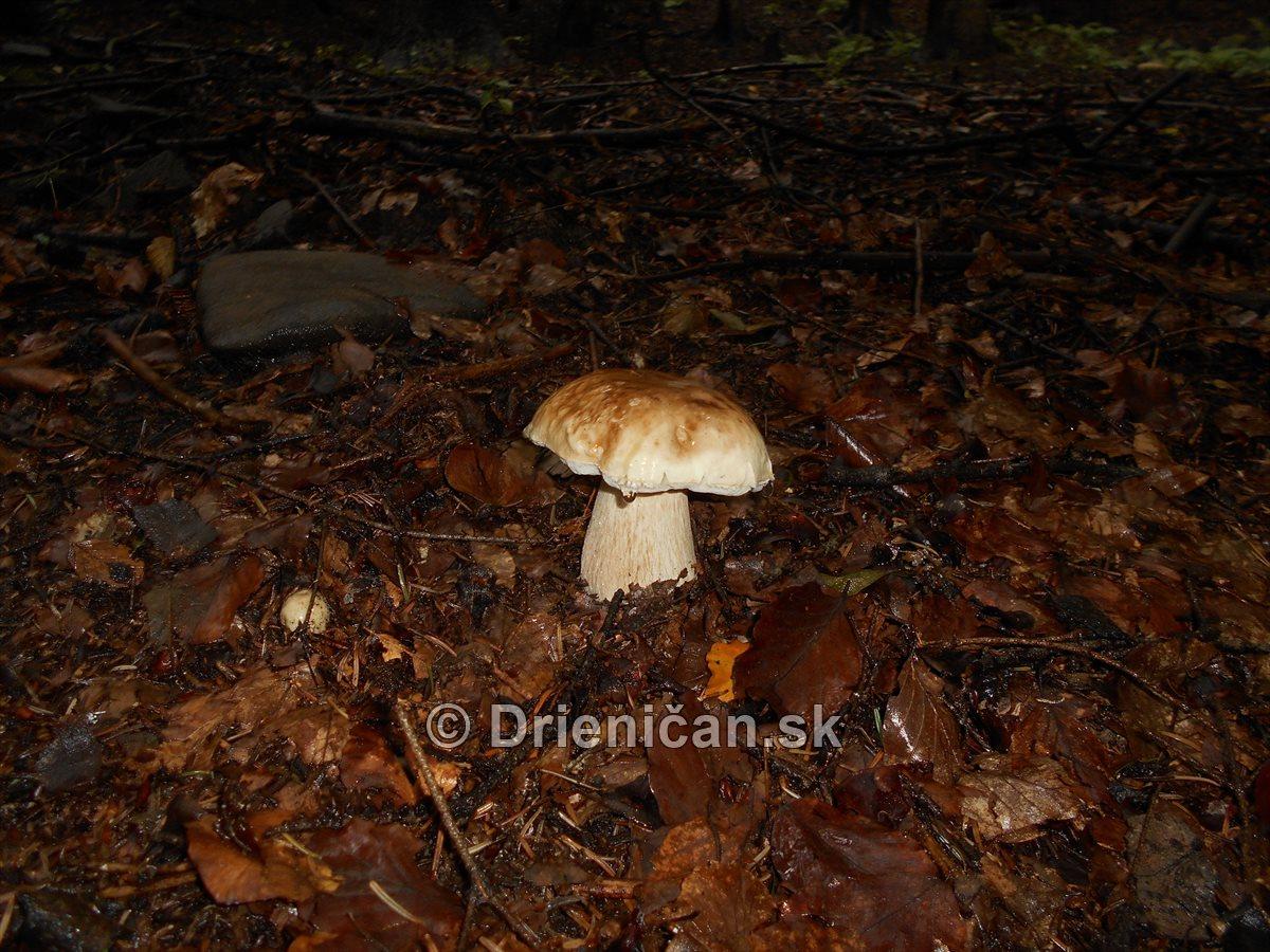 hriby-v-slovenskych-lesoch_03