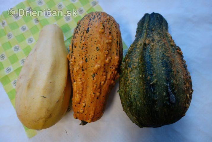 den-zahradkara-drienica-foto_25