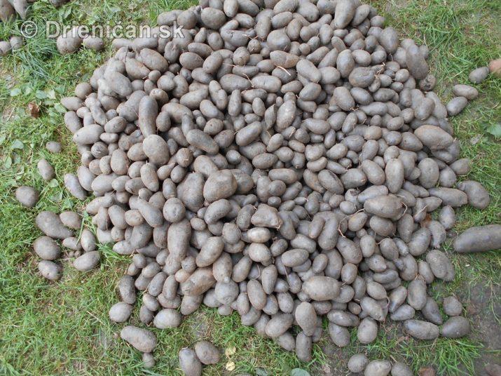fialove-zemiaky-a-vyprazne-hriby_02