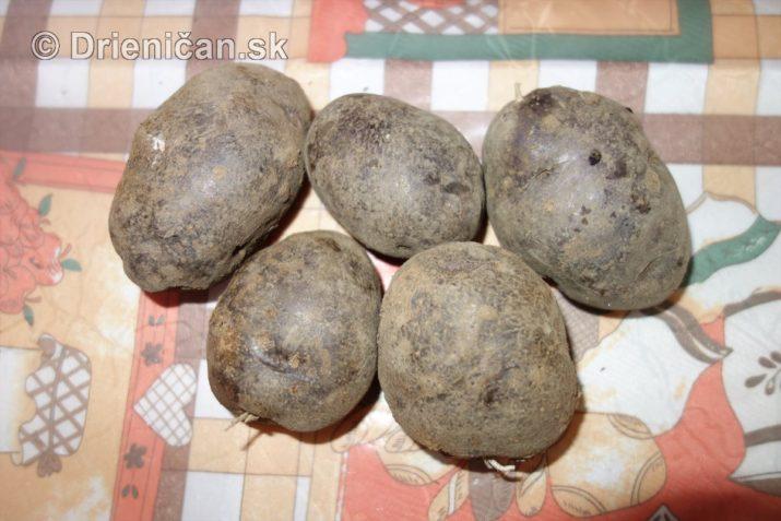 fialove-zemiaky-a-vyprazne-hriby_04