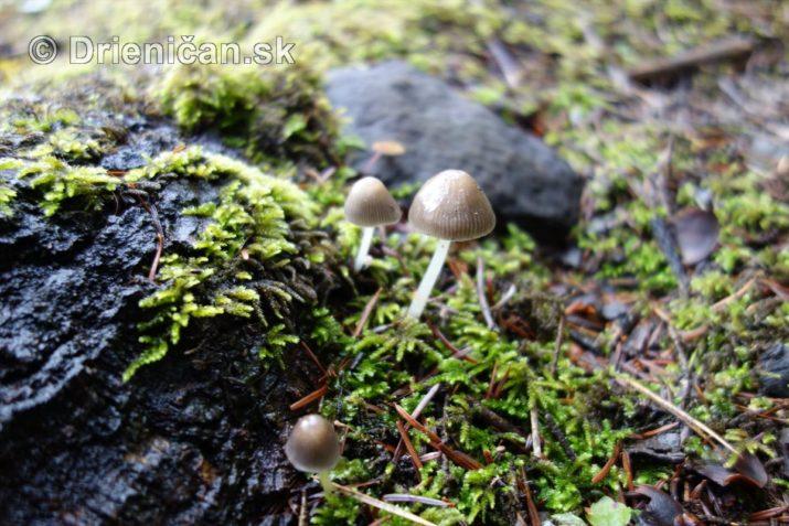 farebna-jesen-v-nasich-lesoch_03
