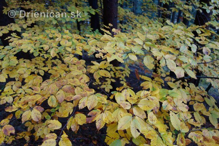 farebna-jesen-v-nasich-lesoch_09