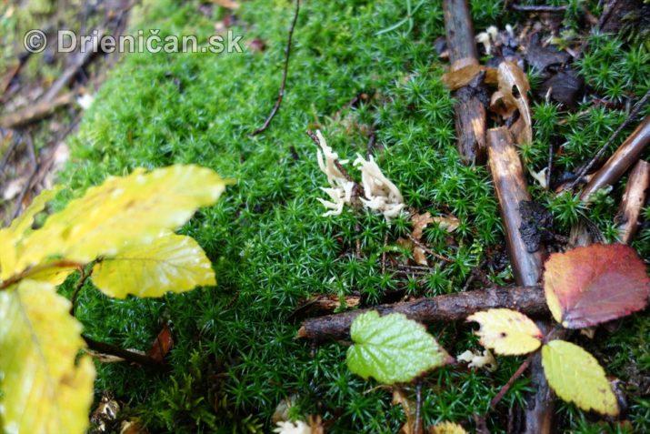 farebna-jesen-v-nasich-lesoch_12