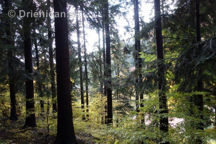 farebna-jesen-v-nasich-lesoch_17