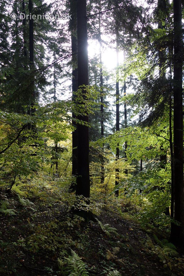 farebna-jesen-v-nasich-lesoch_18