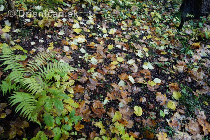 farebna-jesen-v-nasich-lesoch_22