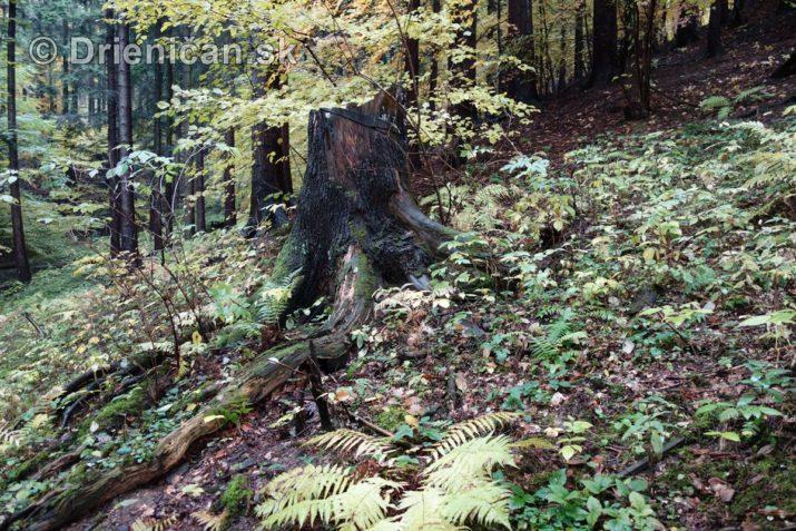 farebna-jesen-v-nasich-lesoch_24