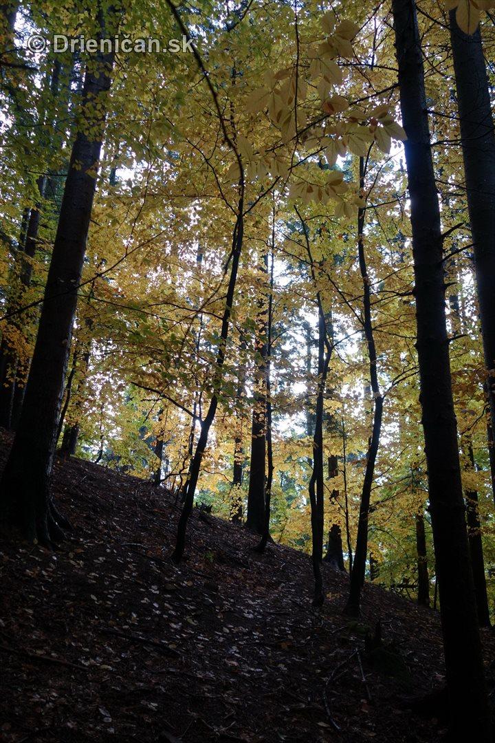 farebna-jesen-v-nasich-lesoch_25