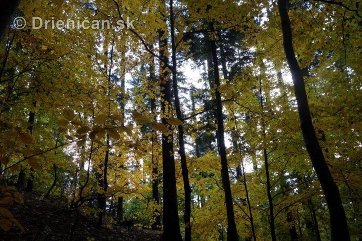farebna-jesen-v-nasich-lesoch_26