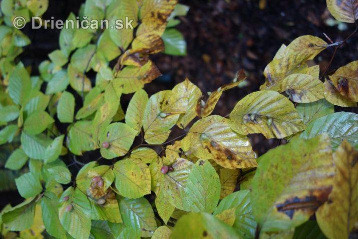 farebna-jesen-v-nasich-lesoch_27