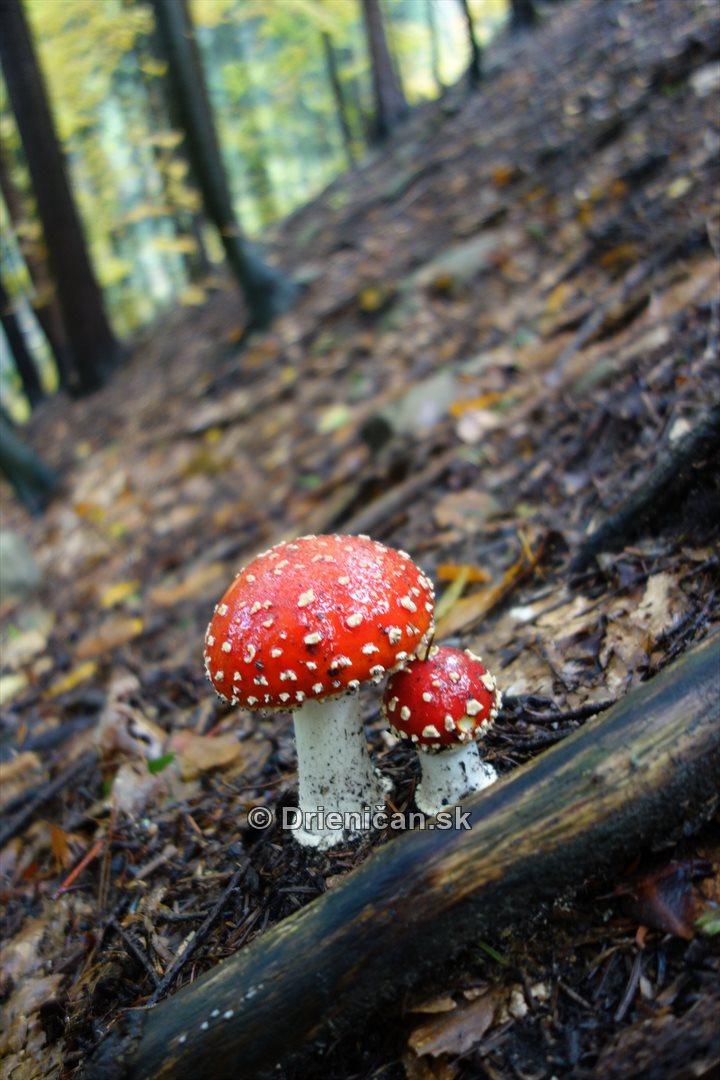 farebna-jesen-v-nasich-lesoch_28