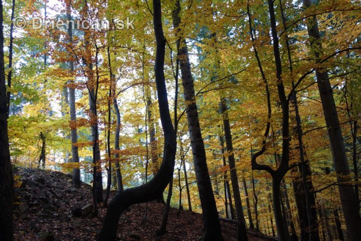 farebna-jesen-v-nasich-lesoch_33
