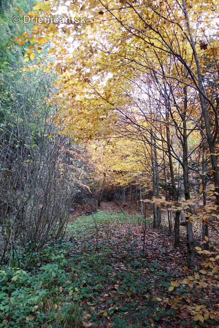 farebna-jesen-v-nasich-lesoch_35