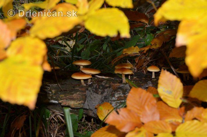 farebna-jesen-v-nasich-lesoch_36