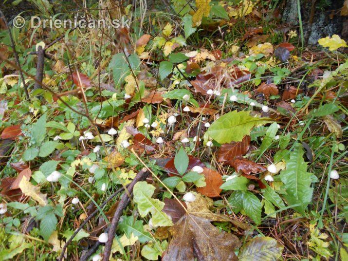 farebna-jesen-v-nasich-lesoch_41
