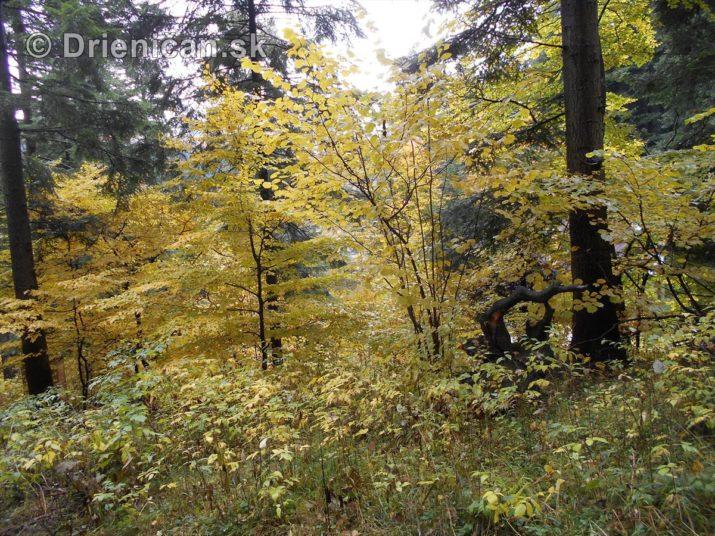 farebna-jesen-v-nasich-lesoch_43